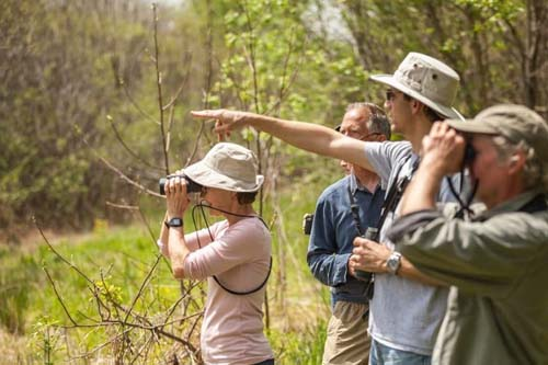 Bird Watching Binoculars Things To Consider